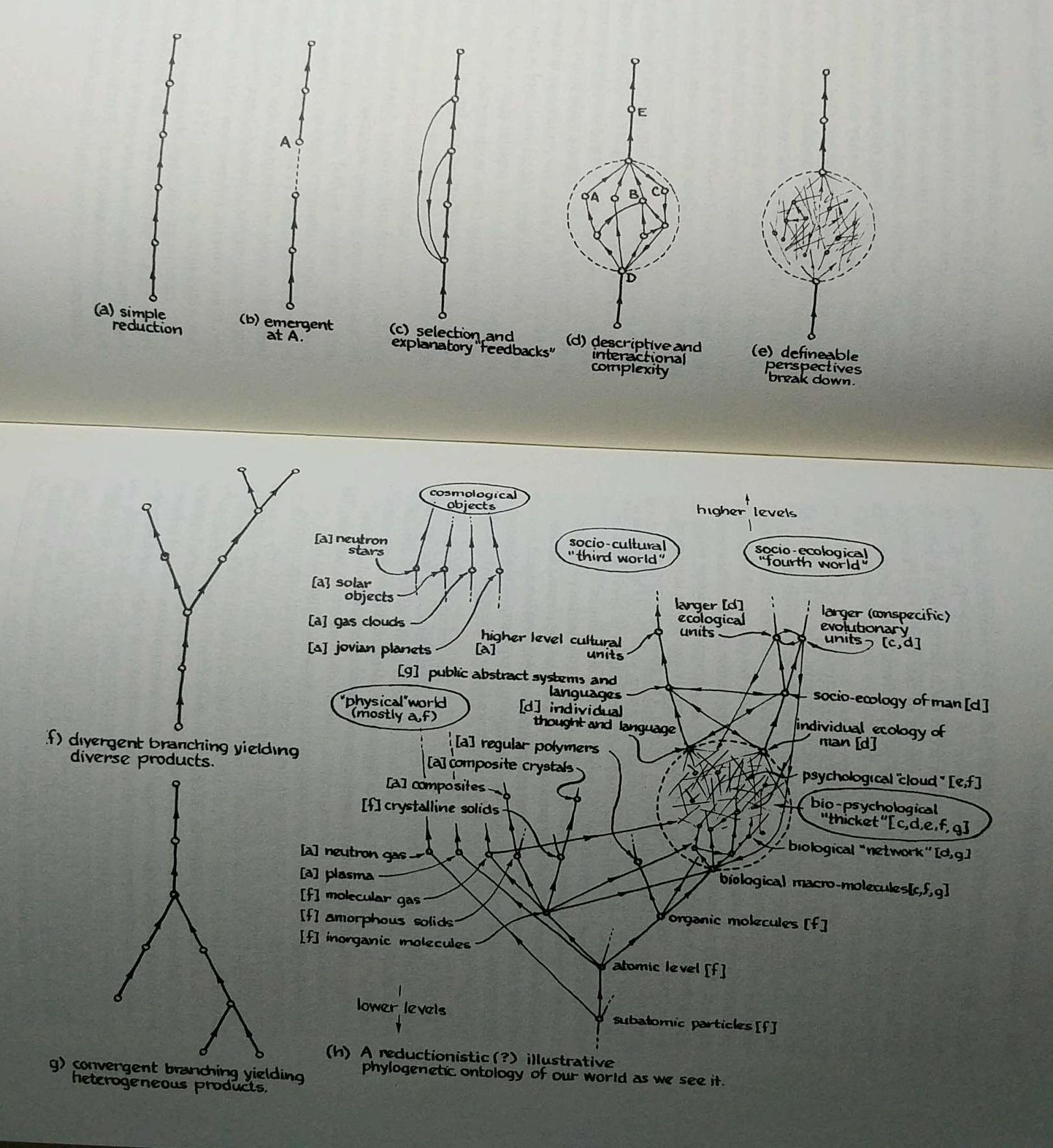 reduction-through-causal-thickets-wimsatt.jpg